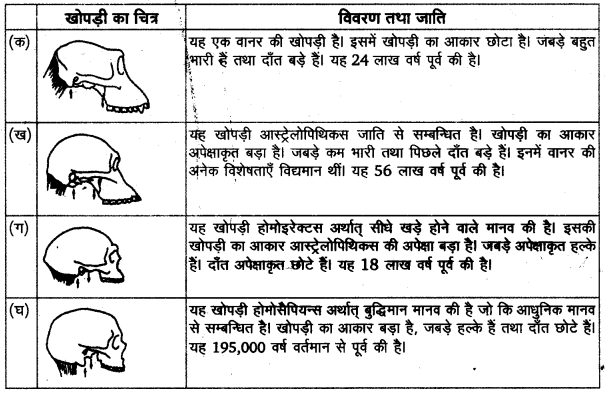 UP Board Solutions for Class 11 History Chapter 1 From the Beginning of Time image 3